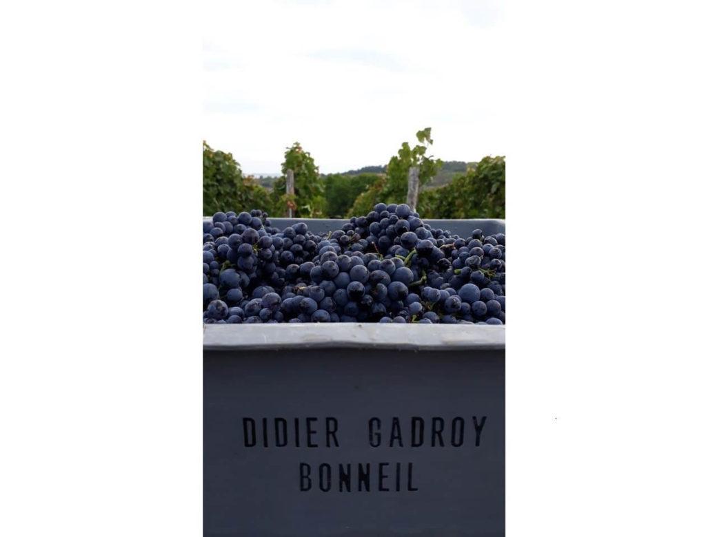 Vendanges Champagne Didier Gadroy