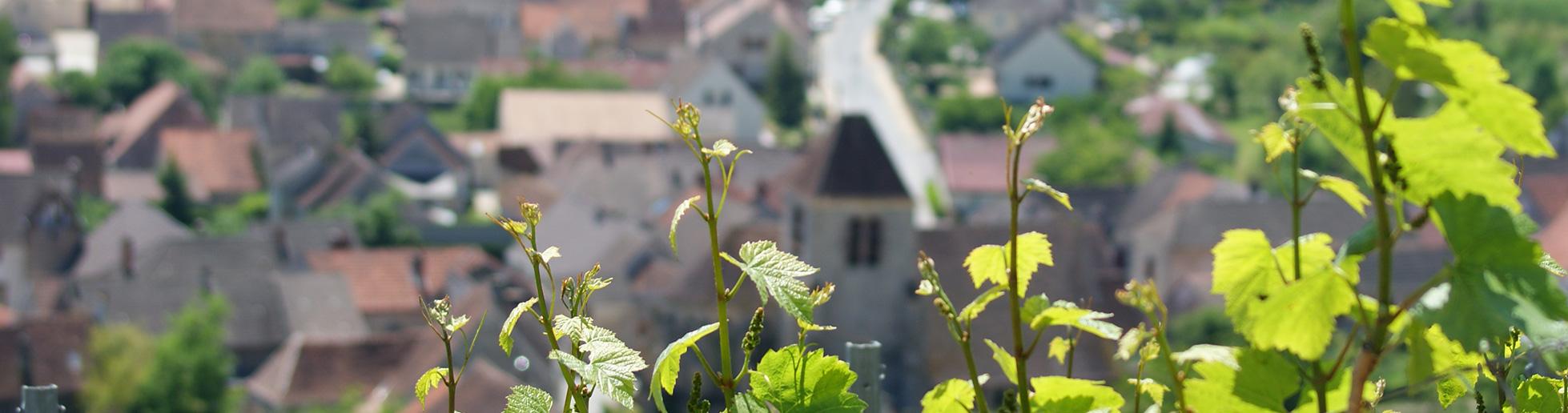 Vignoble Champagne Didier Gadroy & Fils